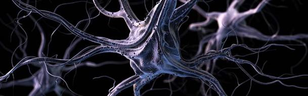 neuro-leytolosa